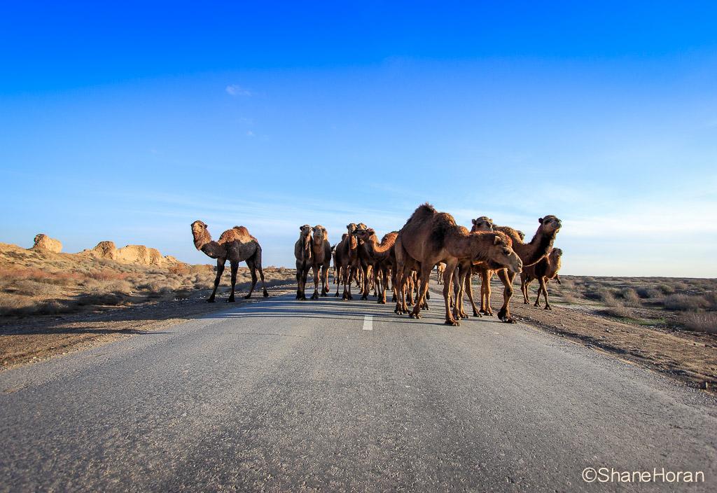 Watermark Camel