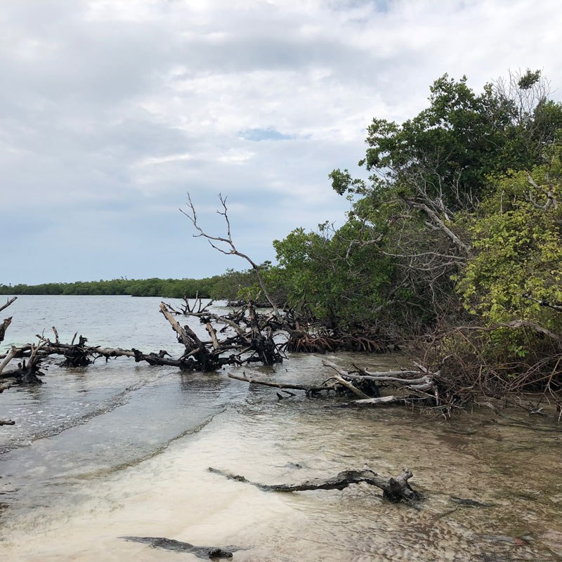 Let's buy an island