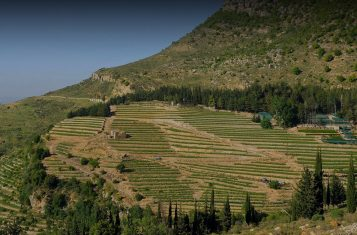 The fields of IXSIR winery, where Lebanese wine is produced.
