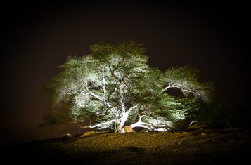 The tree of life in Bahrain