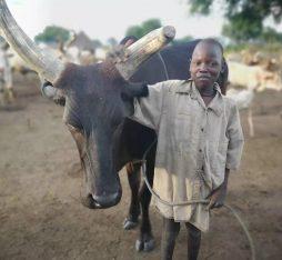 A mundari boy standing proud next to his cow