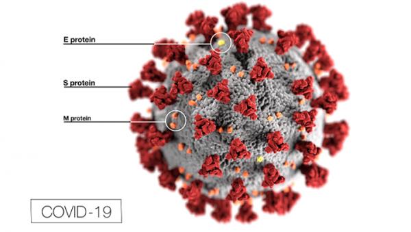 The covid-19 virus