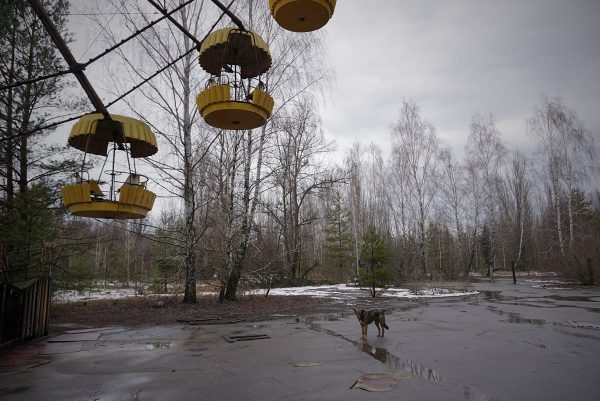 A dog hanging out in Chernobyl exclusion zone